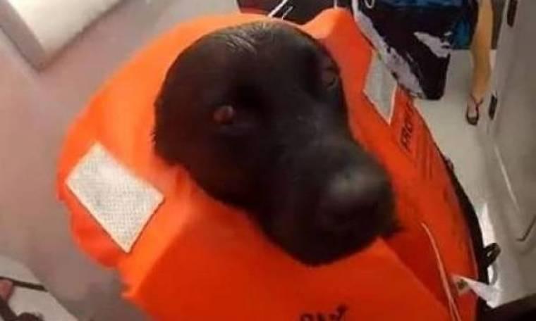 Απίστευτες εικόνες: Σκύλος κολυμπά δίπλα σε δελφίνια (βίντεο)!