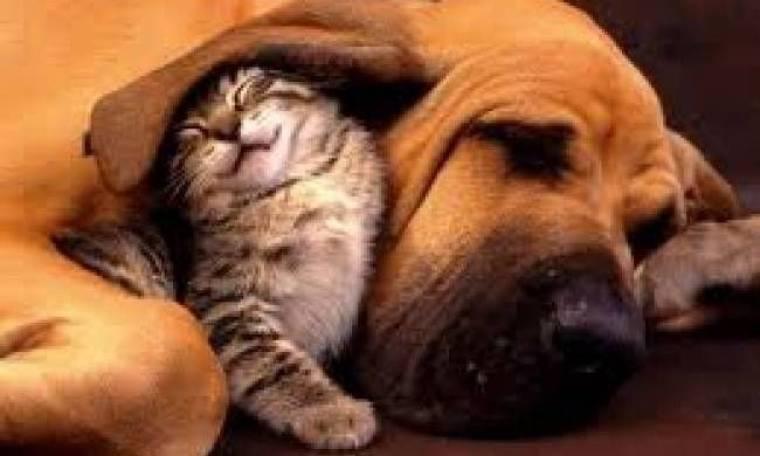 Γάτα σώθηκε ύστερα από μετάγγιση αίματος από σκύλο