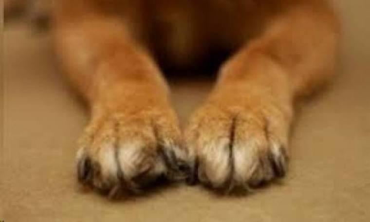 Στυλίδα: Πυροβόλησαν αδέσποτο σκύλο (pic)