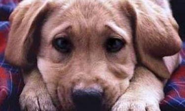 Χαλκιδική: Ασυνείδητοι θανάτωσαν σκυλιά