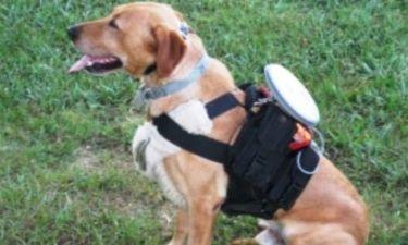 Τηλεκοντρόλ για αφεντικά - τεμπέληδες βγάζει τον σκύλο βόλτα