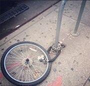Victoria Beckham: Στο «πόδι» η αστυνομία της Νέας Υόρκης για να βρει το ποδήλατό της