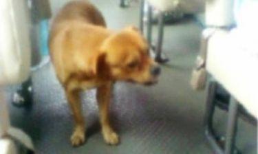 Θα δακρύσετε: Σκύλος αναζητά τον ιδιοκτήτη του στα λεωφορεία (vid)