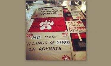 Εριέττα Κούρκουλου: Αύριο η καθιστική διαμαρτυρία για την θανάτωση των αδέσποτων ζώων στην Ρουμανία