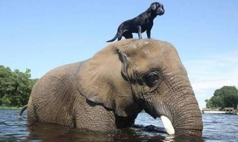 Βίντεο: Σπάνια φιλία σκύλου και ελέφαντα