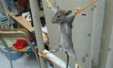 Θύελλα αντιδράσεων για τον Παλαιστίνιο που «σταύρωσε» ποντίκι (pics)