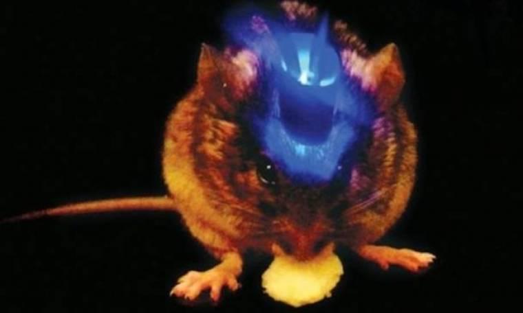 Επιστήμονες απενεργοποιούν το αίσθημα της πείνας με χρήση laser