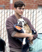 Ο Ashton Kutcher απαρηγόρητος καθώς πάει τον σκύλο του για ευθανασία! (φωτό)