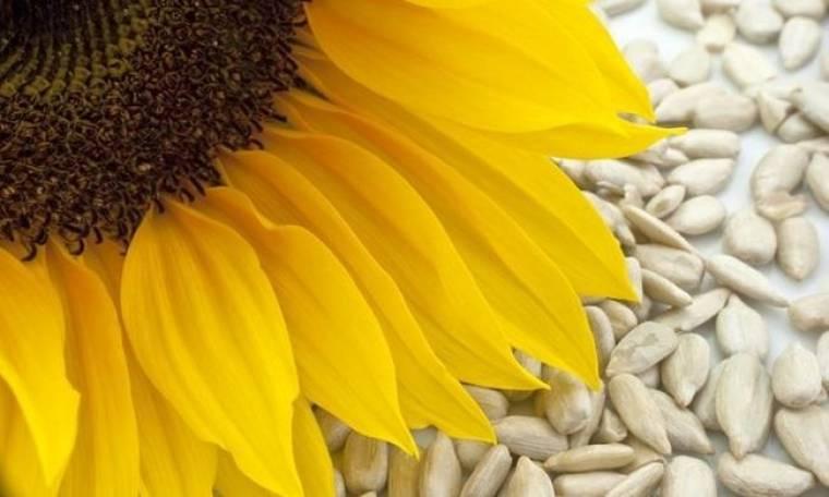 Ηλιόσπορος: Το θρεπτικό σνακ που ωφελεί την υγεία