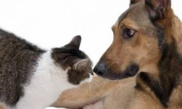 Όταν οι σκύλοι... τρέμουν τις γάτες! (vid)