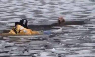 Επιχείρηση διάσωσης σκύλου που είχε πέσει σε παγωμένο ποτάμι (βίντεο)