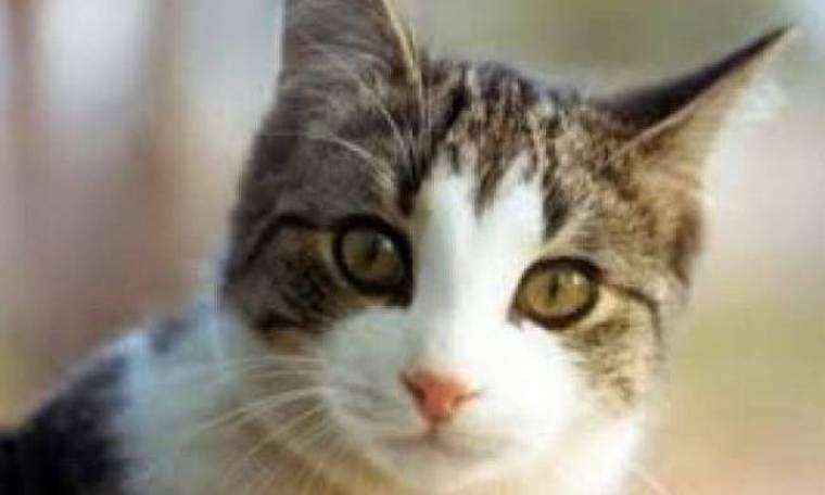 Σικελία: Μαζί με τους μετανάστες υπήρχε και μια... γάτα!