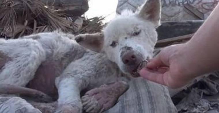 Η ιστορία της Μίλι: Βρέθηκε εγκαταλελειμμένη στα σκουπίδια και «αναστήθηκε» από διασώστες! (βίντεο)