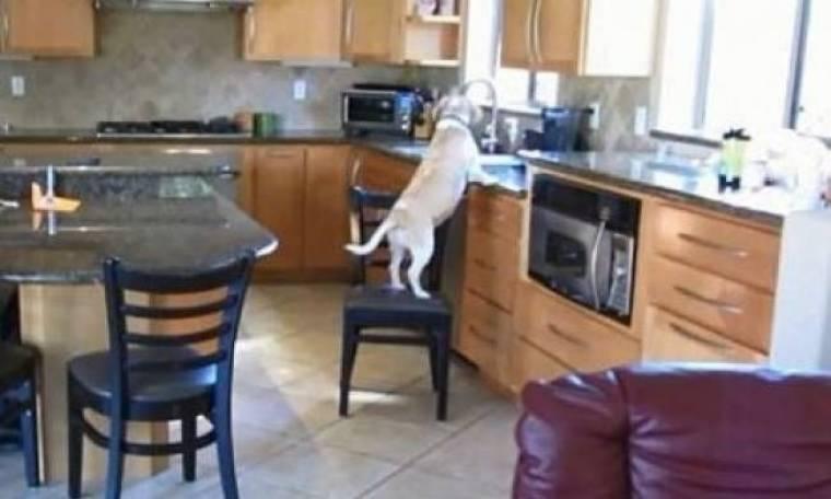 Κάνει τον γύρο του κόσμου: Σκύλος πείνασε και άνοιξε τον φούρνο (vid)!