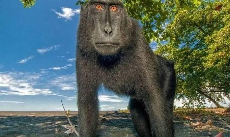 Απίθανες μαϊμούδες ποζάρουν στο φακό! (photos)