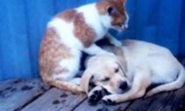 Βίντεο: Γάτες κάνουν μασάζ σε σκύλους!