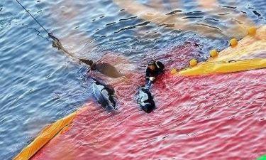 Σοκαριστικό! Μαζική σφαγή δελφινιών στο Ταϊτζί!