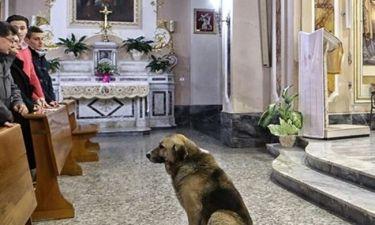 Συγκλονιστική ιστορία: Σκύλος περίμενε καθημερινά στην εκκλησία τη γυναίκα που τον μεγάλωσε