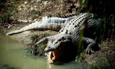 Αυστραλία: Κροκόδειλος επιτέθηκε και «εξαφάνισε»12 χρονο αγόρι!