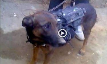 Βίντεο: Σκύλο-αιχμάλωτο κρατούν οι Ταλιμπάν!