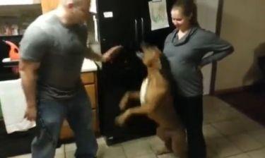 Ο καλύτερος φύλακας για το αγέννητο μωρό της! Ορμάει σε όποιον πλησιάζει την κοιλιά της! (βίντεο)