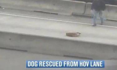 Διάσωση σκύλου με ένα σάντουιτς (video)