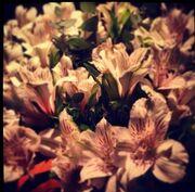 Τα λουλούδια στην Καινούργιου από τον…