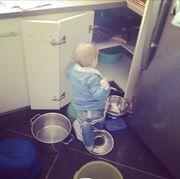 Ο μπόμπιρας «εξερευνεί» την κουζίνα (φωτό)