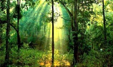 Πως παίρνουμε ενέργεια από τα φυτά