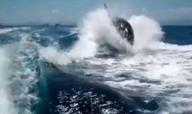 Φάλαινες-δολοφόνοι κυνηγούν... σκάφος! (vid)