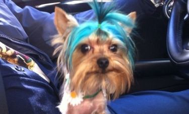 Έβαψε τον σκύλο του… μπλέ!