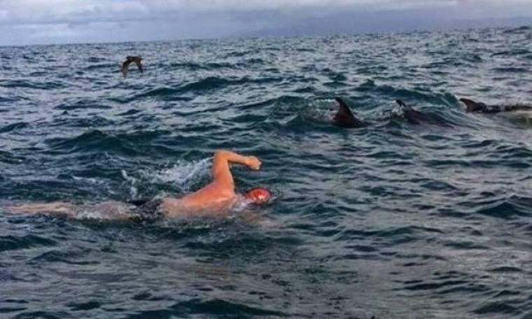 Δελφίνια έσωσαν κολυμβητή από καρχαρία! (video)