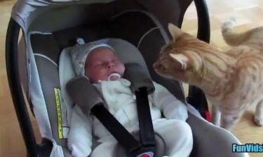 Συστήνουν το νεογέννητο στα κατοικίδιά τους! Πώς αντιδρούν; (εικόνες,βίντεο)