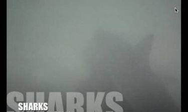 Βίντεο που παγώνει το αίμα: Καρχαρίες περικυκλώνουν νεαρούς σέρφερ!