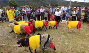 Mundial 2014: Τρελή... μπάλα από πρόβατα! (video)