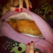 Ένα γατάκι στο νεσεσέρ της