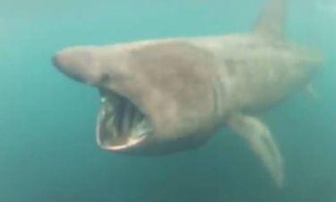 Κορνουάλη: Καρχαρίας παραλίγο να καταπιεί κολυμβητή! (video)