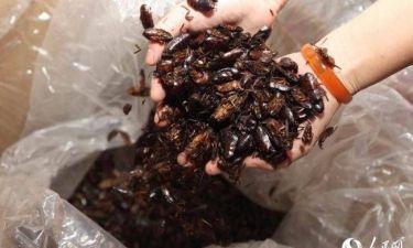Έχει για κατοικίδια... 100.000 κατσαρίδες! (pics)