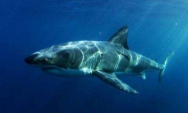 Βίντεο: Βρέθηκε το... τέρας που κατασπάραξε τεράστιο λευκό καρχαρία