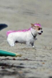Απίστευτο! Έβαψε τα μαλλιά της κόρης αλλά και του σκύλου της ροζ!