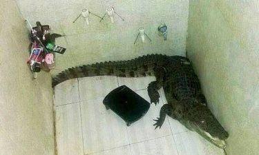 Βρήκε στο μπάνιο του έναν... κροκόδειλο! (pic)