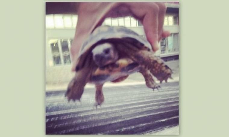 Ποιος έσωσε αυτό το χελωνάκι;