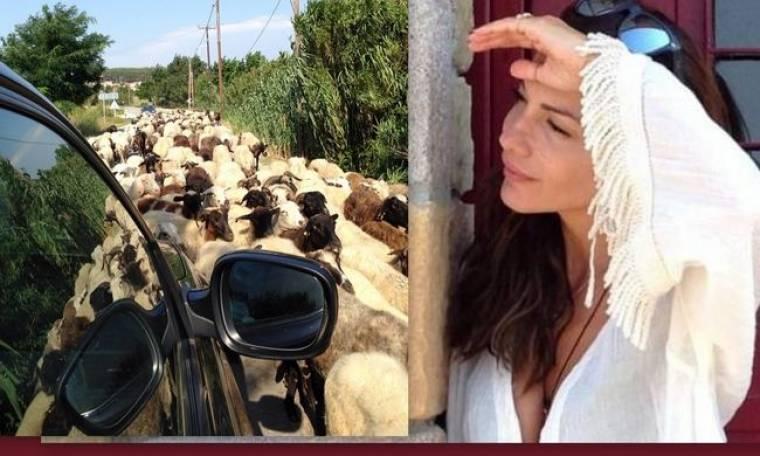 Δέσποινα Βανδή: Ένα κοπάδι από πρόβατα, της έκλεισε το δρόμο
