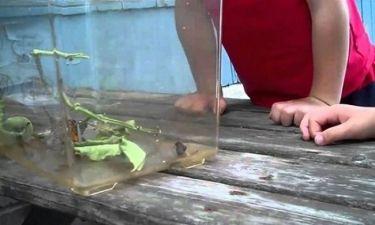 Η απίστευτη αντίδραση ενός αγοριού όταν πετάγεται πάνω του μία πεταλούδα! (βίντεο)