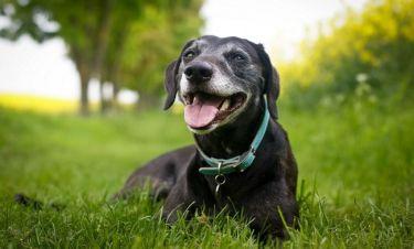 Δείτε και δακρύστε! Σκύλος κλαίει από την χαρά του όταν βλέπει το αφεντικό του μετά από καιρό!
