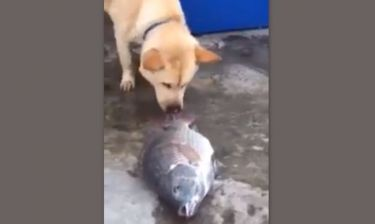 Τρυφερό βίντεο! Σκύλος προσπαθεί να σώσει ψάρια