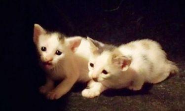 Έλληνας τραγουδιστής βρήκε αυτά τα γατάκια στο καμαρίνι του!
