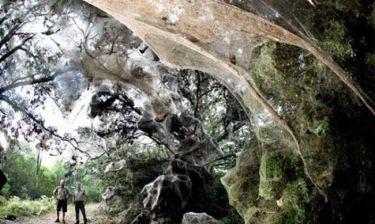Τι γνωρίζετε για την γιγαντιαία αράχνη του Κονγκό;