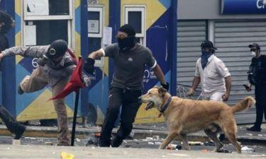 Πέθανε ο «Λουκάνικος» ο σκύλος – σύμβολο των διαδηλώσεων