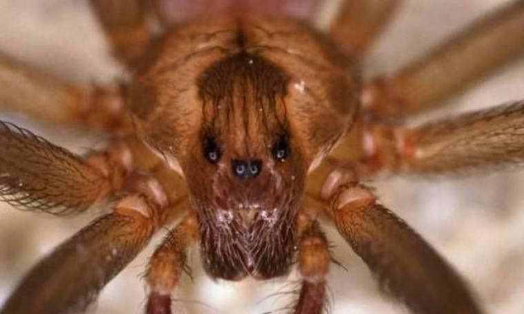Έχουν εισβάλλει στο σπίτι τους 6.000 αράχνες! (pics)